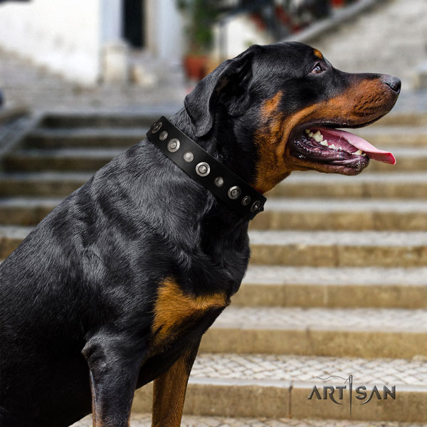 Rottweiler easy wearing collar with significant adornments for your doggie