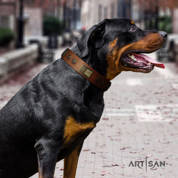 Rottweiler easy adjustable collar with significant embellishments for your four-legged friend