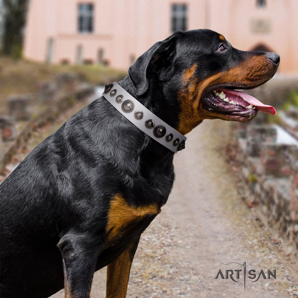 Rottweiler handmade collar with extraordinary studs for your canine
