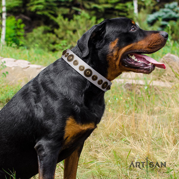 Rottweiler handmade collar with extraordinary studs for your four-legged friend