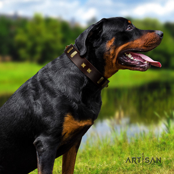 Rottweiler everyday use full grain leather collar for your lovely dog