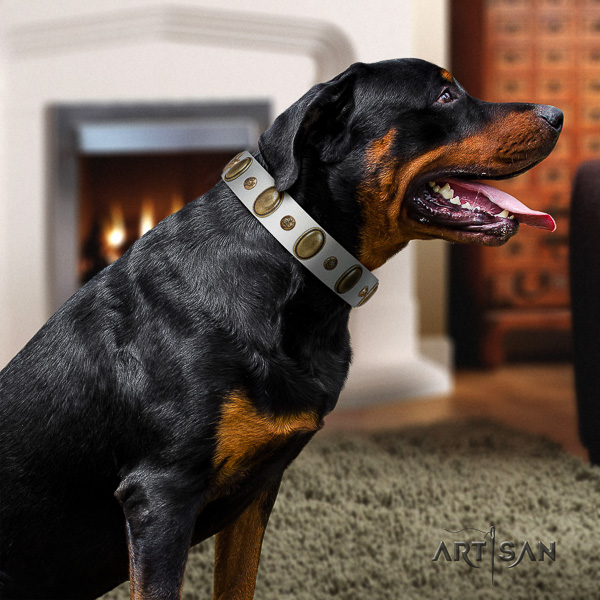 Rottweiler daily use full grain natural leather collar for your impressive canine