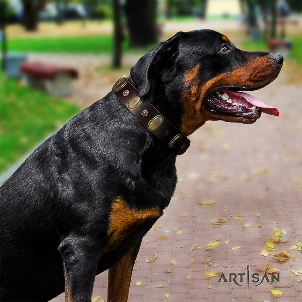 Rottweiler easy wearing full grain genuine leather collar for your beautiful doggie