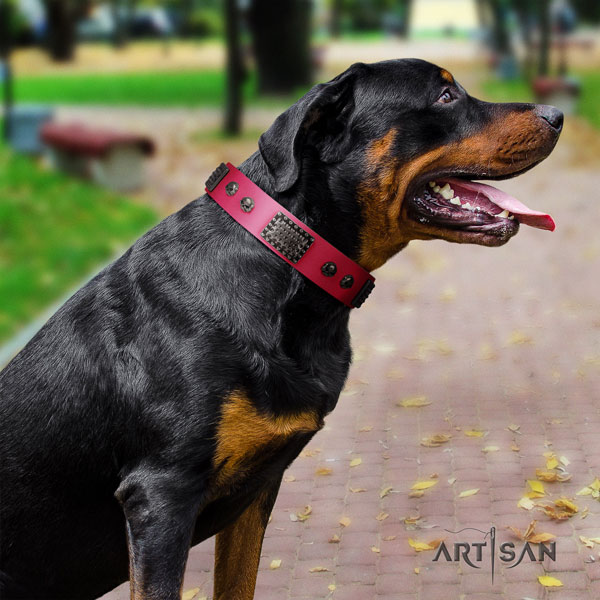 Rottweiler comfortable collar with unique studs for your four-legged friend