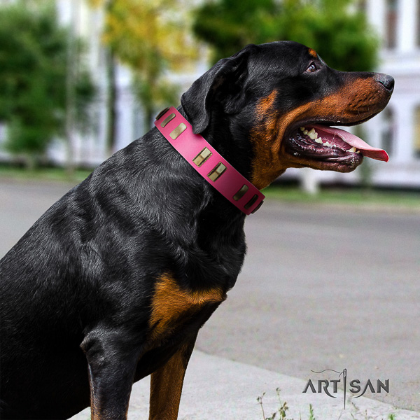 Rottweiler comfortable wearing natural leather collar for your stylish pet
