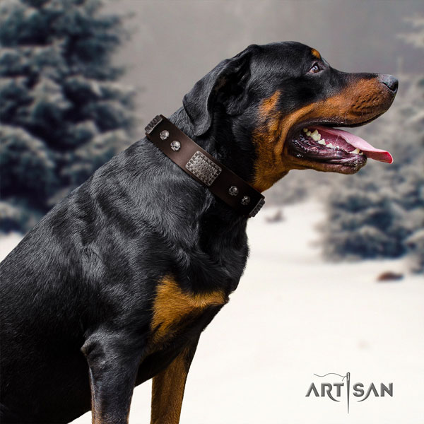 Rottweiler handcrafted collar with stylish adornments for your canine