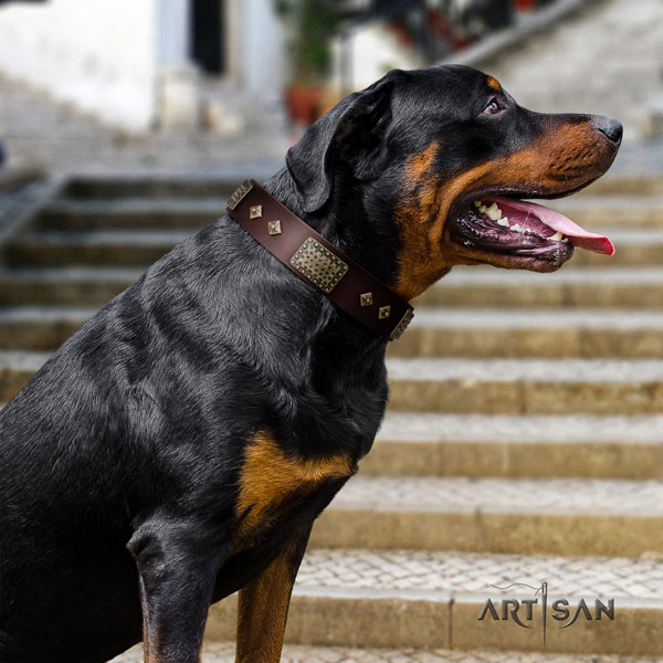 Rottweiler adjustable collar with incredible adornments for your pet