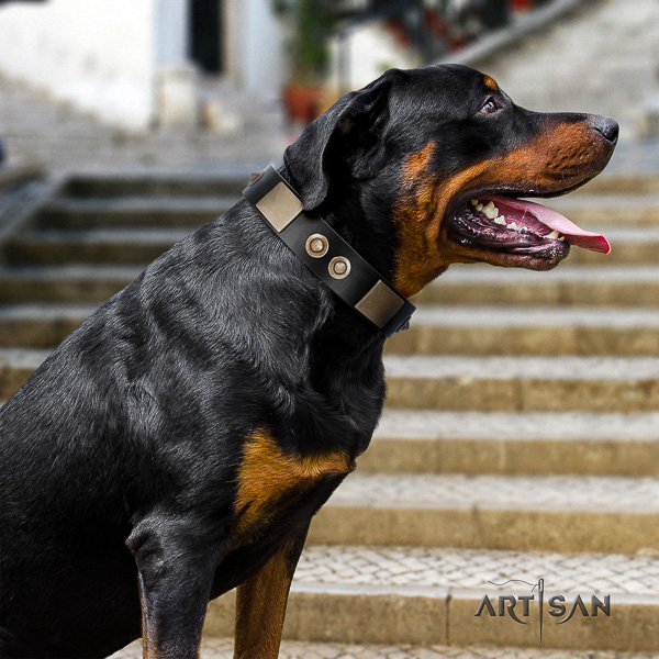 Rottweiler everyday use full grain leather collar for your lovely pet