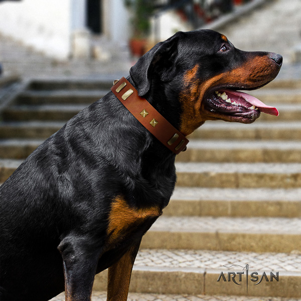Rottweiler comfortable wearing leather collar for your beautiful dog