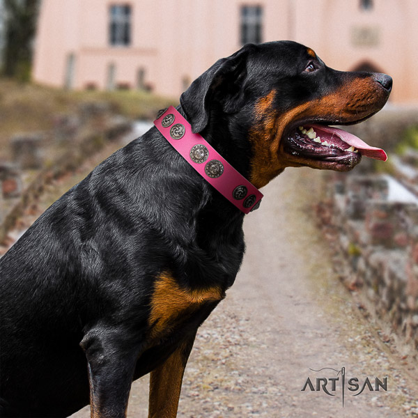 Rottweiler comfy wearing full grain natural leather collar for your attractive dog