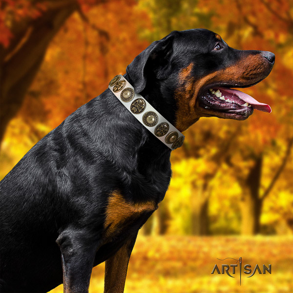 Rottweiler fancy walking full grain leather collar for your lovely doggie