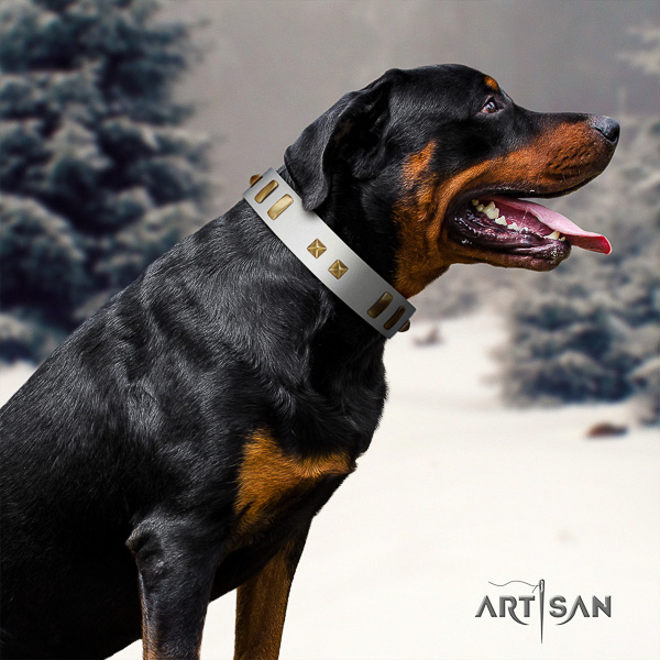 Rottweiler daily walking natural leather collar for your lovely four-legged friend