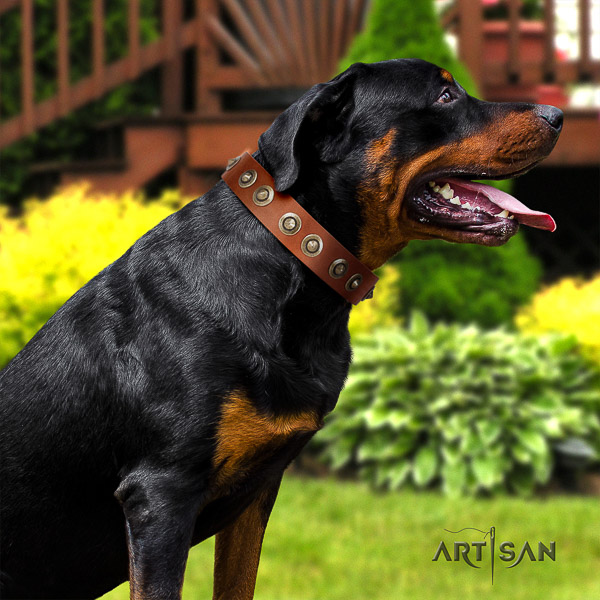 Rottweiler basic training natural leather collar for your impressive four-legged friend