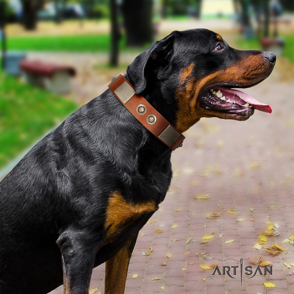 Rottweiler walking genuine leather collar for your lovely doggie