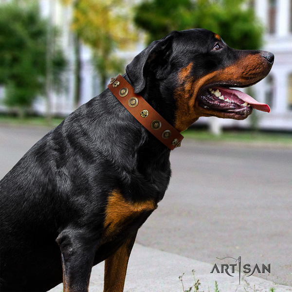Rottweiler comfortable wearing full grain natural leather collar for your lovely pet