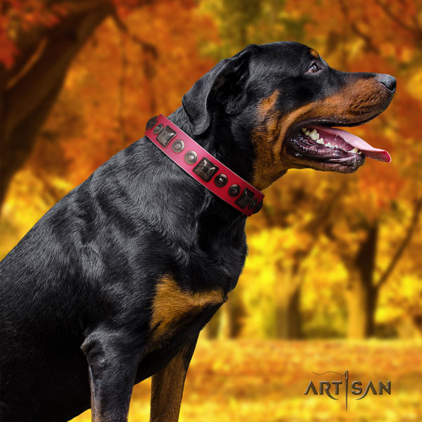 Rottweiler easy wearing collar with extraordinary adornments for your doggie