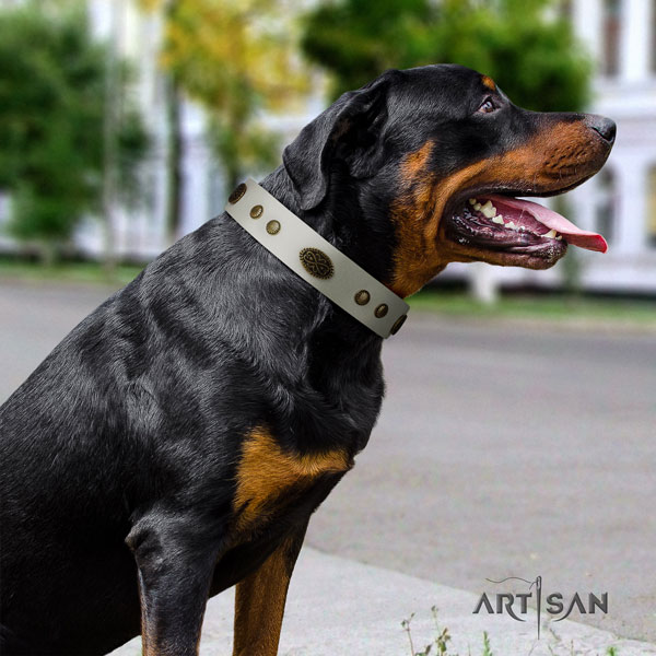 Rottweiler convenient collar with unique studs for your pet