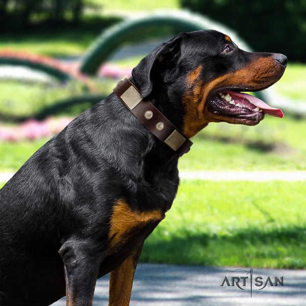 Rottweiler easy wearing leather collar for your impressive pet