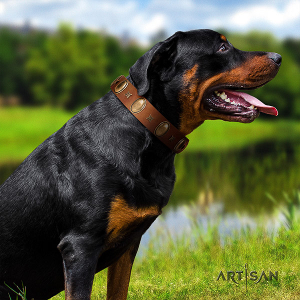 Rottweiler basic training natural leather collar for your handsome pet