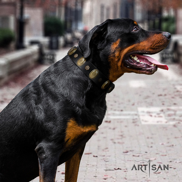 Rottweiler everyday use leather collar for your stylish pet