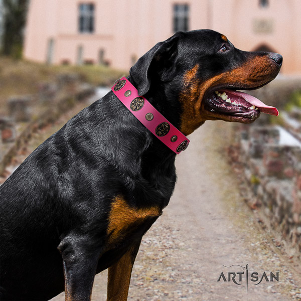 Rottweiler comfy wearing full grain leather collar for your beautiful doggie