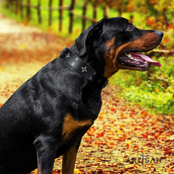 Rottweiler basic training natural leather collar for your stylish pet