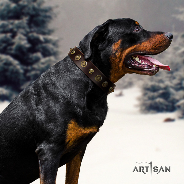 Rottweiler comfortable wearing natural leather collar for your attractive dog