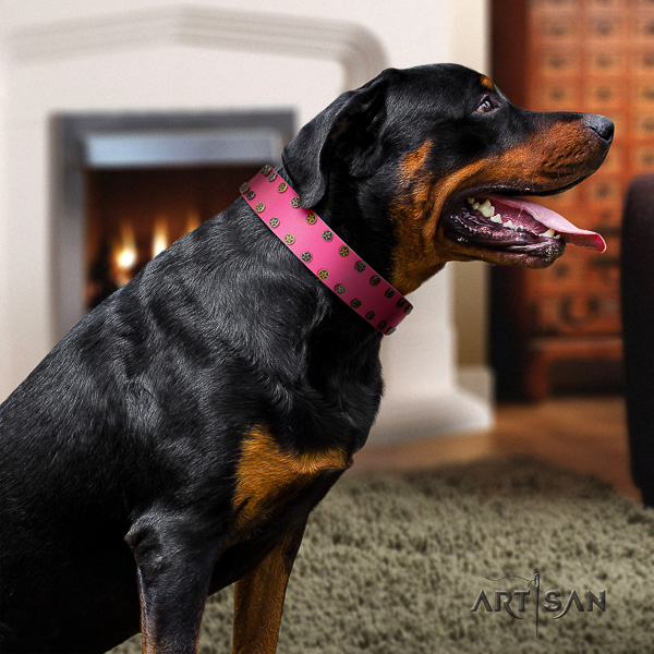 Rottweiler everyday use full grain genuine leather collar for your beautiful doggie