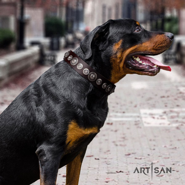 Rottweiler comfortable collar with incredible embellishments for your dog