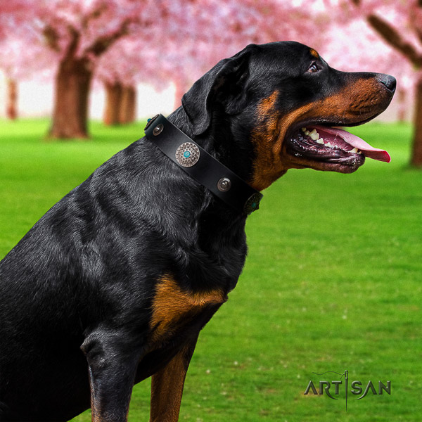 Rottweiler basic training natural leather collar for your lovely dog