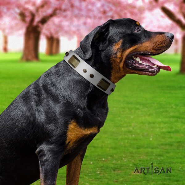 Rottweiler easy wearing collar with extraordinary decorations for your pet