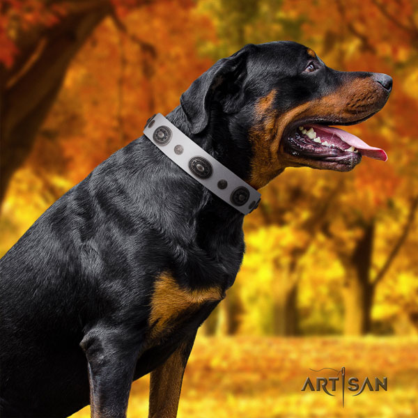 Rottweiler fine quality collar with impressive embellishments for your doggie