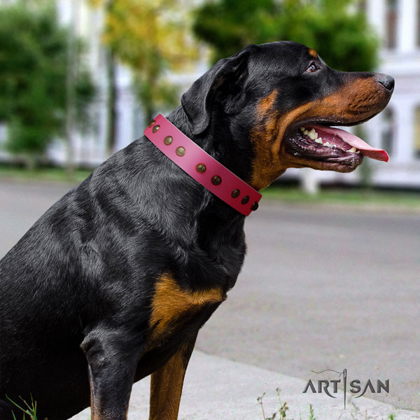 Rottweiler perfect fit collar with stunning embellishments for your canine