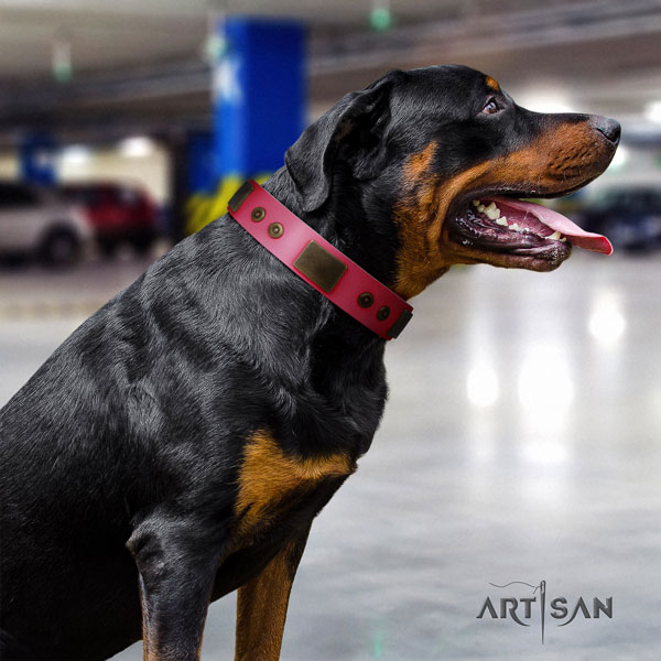 Rottweiler easy wearing collar with trendy studs for your doggie