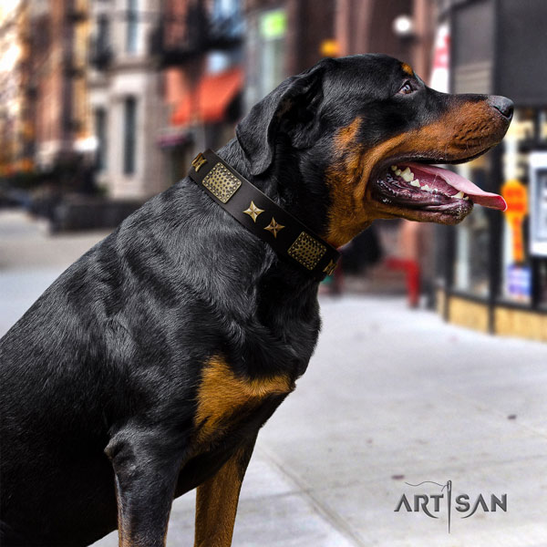 Rottweiler convenient collar with remarkable adornments for your dog