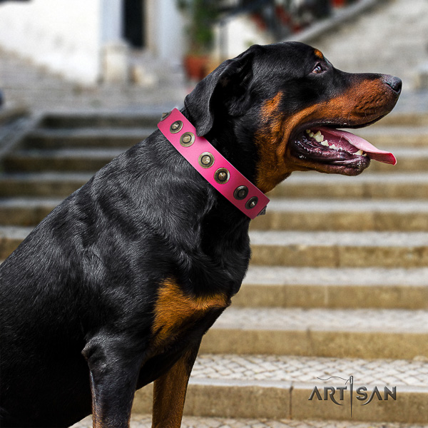 Rottweiler stylish walking natural leather collar for your stylish canine