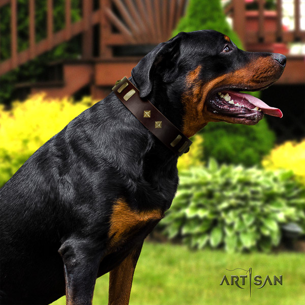 Rottweiler comfortable wearing leather collar for your beautiful doggie
