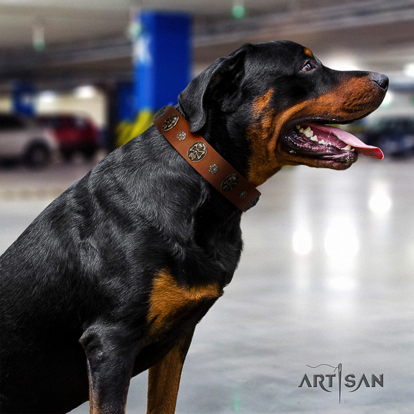 Rottweiler everyday walking genuine leather collar for your lovely four-legged friend