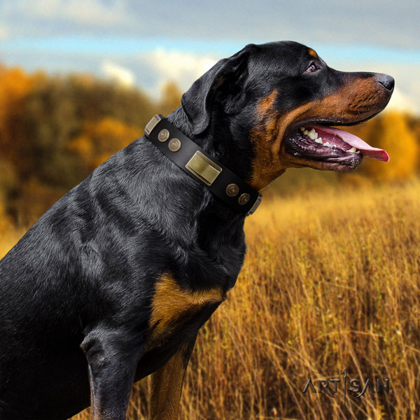 Rottweiler perfect fit collar with top notch adornments for your pet