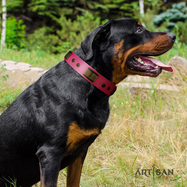 Rottweiler handcrafted collar with inimitable embellishments for your doggie