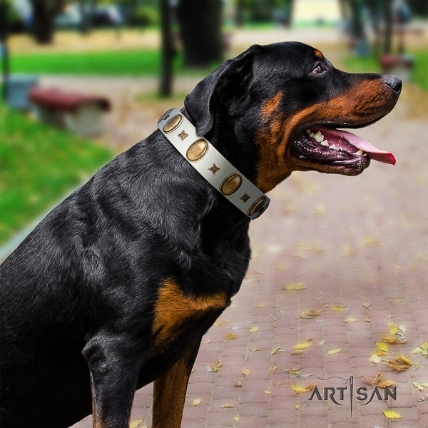Rottweiler walking full grain natural leather collar for your stylish canine