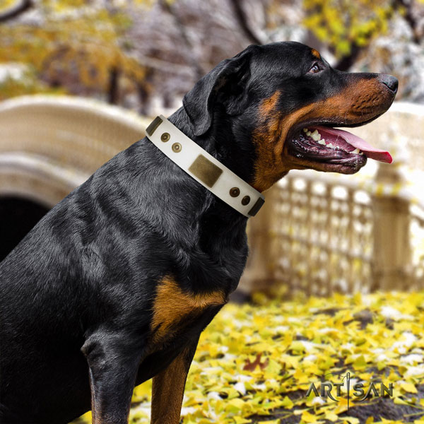 Rottweiler top quality collar with remarkable studs for your doggie