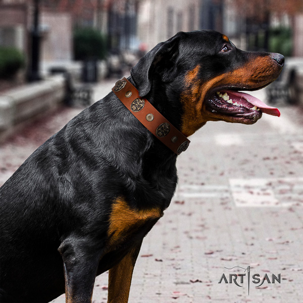 Rottweiler fancy walking full grain genuine leather collar for your attractive doggie