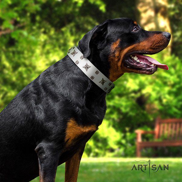 Rottweiler comfortable wearing full grain genuine leather collar for your beautiful doggie