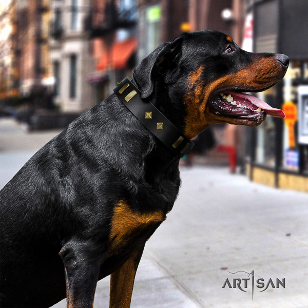 Rottweiler everyday use natural leather collar for your attractive pet