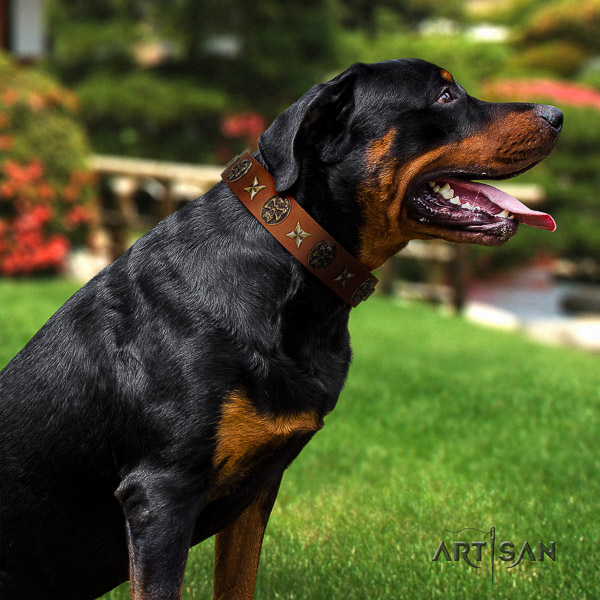 Rottweiler comfortable wearing full grain leather collar for your beautiful doggie