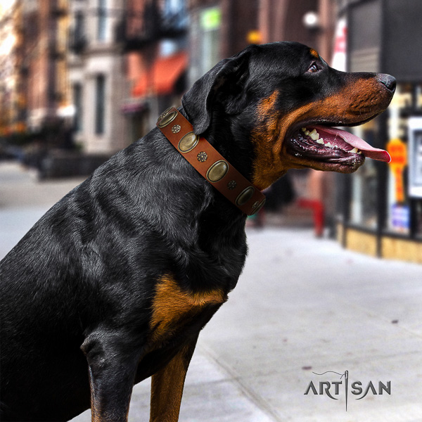 Rottweiler easy wearing genuine leather collar for your impressive four-legged friend