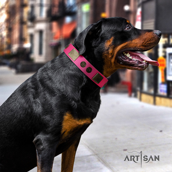Rottweiler everyday walking full grain genuine leather collar for your impressive four-legged friend
