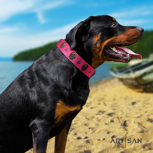 Rottweiler comfy wearing full grain genuine leather collar for your impressive doggie