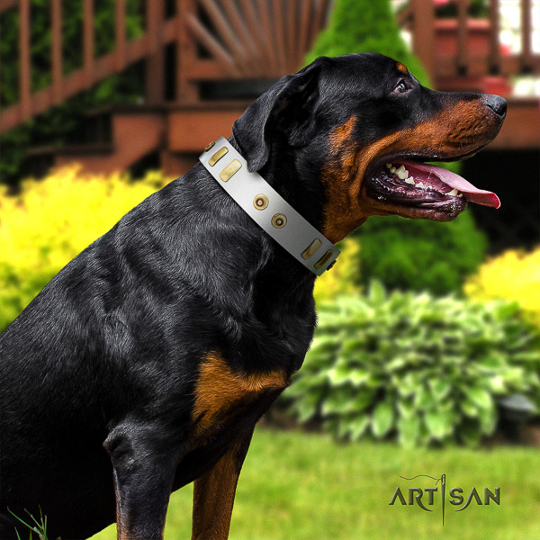 Rottweiler everyday use full grain genuine leather collar for your attractive canine